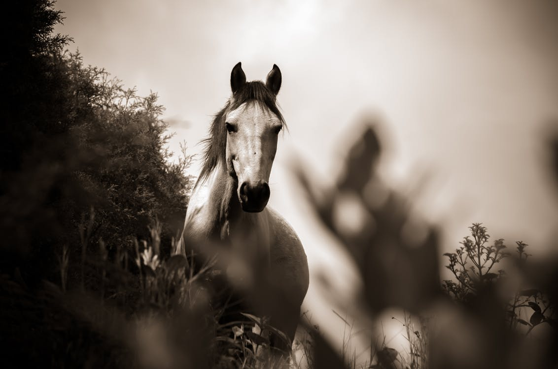 Villa-Nissos-Southern-Corfu-Issos-horse-riding-tour-limni-korission
